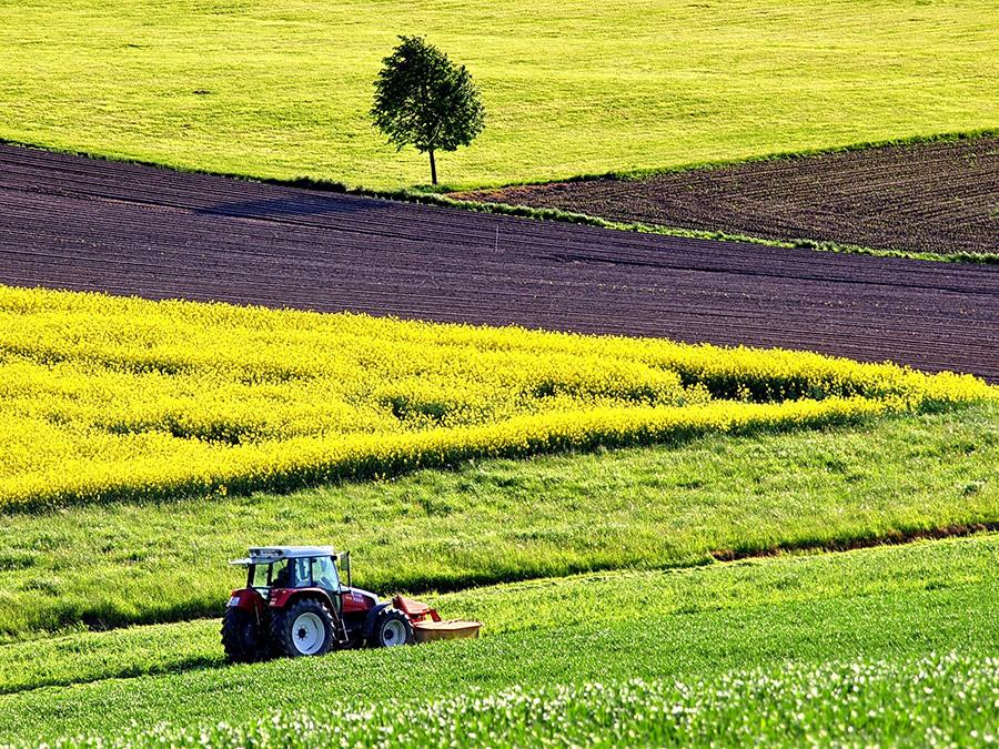Coaching agrícola